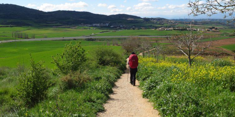 camino_peregrino andando
